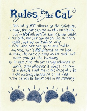462-1114-rules-for-the-cat
